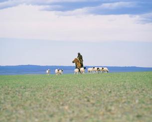 羊と牧童の写真素材 [FYI04011143]