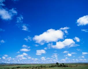 サバンナに浮く雲の写真素材 [FYI04011233]