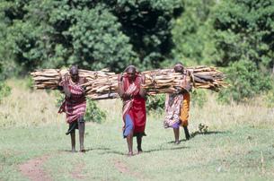 マサイ族の働く女性 マサイマラの写真素材 [FYI04011358]