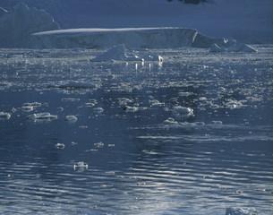 ニコ・ハーバーの浮いている氷の写真素材 [FYI04011428]