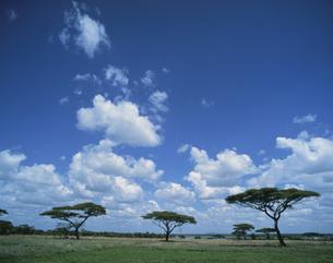 サバンナに浮く雲 1月 タンザニアの写真素材 [FYI04011570]