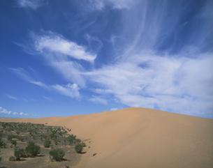 モルツォク砂丘 南ゴビ 7月 モンゴルの写真素材 [FYI04011585]