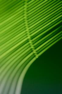 光と影 グリーンの写真素材 [FYI04011652]
