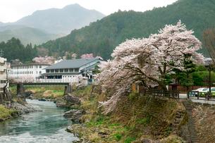 吉田川と桜の写真素材 [FYI04011674]