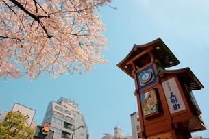 人形町の桜の写真素材 [FYI04011676]