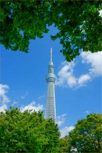 東京スカイツリーの写真素材 [FYI04011681]