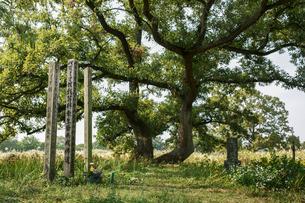 旧谷中村共同墓地の写真素材 [FYI04011699]