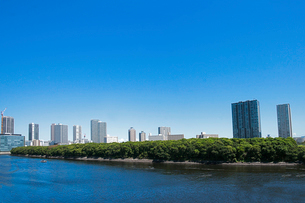 豊洲から東雲方向を望むの写真素材 [FYI04011736]