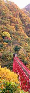 山彦橋と紅葉 黒部峡谷の写真素材 [FYI04012769]