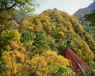 紅葉の黒部峡谷と山彦橋の写真素材 [FYI04012773]