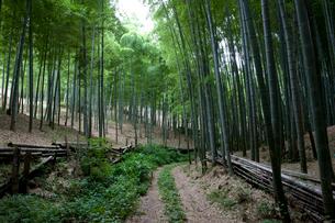 向日市の竹林の写真素材 [FYI04014196]
