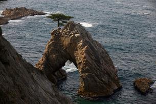 浦富海岸の千貫松島の写真素材 [FYI04014259]