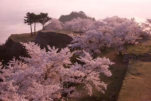 早朝の竹田城跡と桜の写真素材 [FYI04014271]