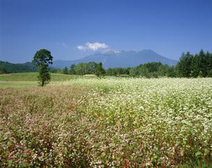 御岳山とそば畑 開田高原の写真素材 [FYI04014760]