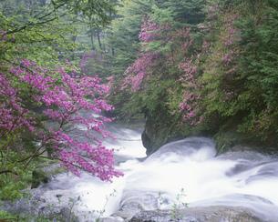 竜頭の滝の写真素材 [FYI04014858]