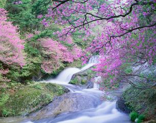 竜頭の滝の写真素材 [FYI04014859]
