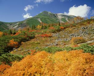 乗鞍岳と紅葉 乗鞍高原より望むの写真素材 [FYI04014892]
