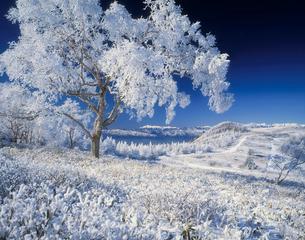 霧氷の木と北アルプスの写真素材 [FYI04014917]