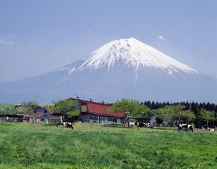 富士山と牧場の写真素材 [FYI04014934]