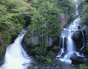 竜頭の滝 日光市     5月の写真素材 [FYI04014959]