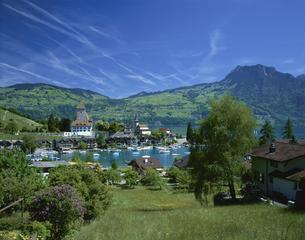 トゥーン湖畔 5月     スイスの写真素材 [FYI04016159]