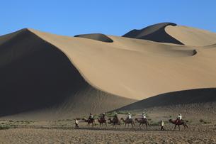 鳴沙山 駱駝と砂丘の写真素材 [FYI04016498]