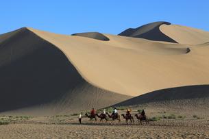 鳴沙山 駱駝と砂丘の写真素材 [FYI04016499]