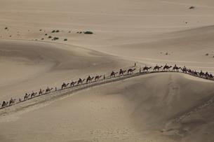 鳴沙山 駱駝の列の写真素材 [FYI04016512]