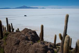 インカワシ島のサボテンと塩の湖の写真素材 [FYI04016775]