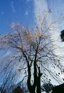 樹形の写真素材 [FYI04016860]