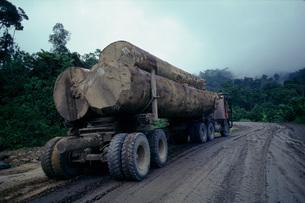 熱帯雨林から切り出す材木の写真素材 [FYI04016910]