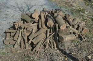 薪用の小さい木の写真素材 [FYI04017002]