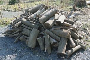 薪用の小さい木の写真素材 [FYI04017004]