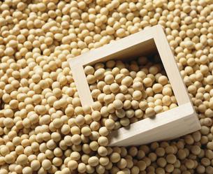 大豆の写真素材 [FYI04018172]
