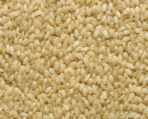 発芽米の写真素材 [FYI04018185]