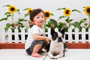 犬を触る赤ちゃんの写真素材 [FYI04018490]