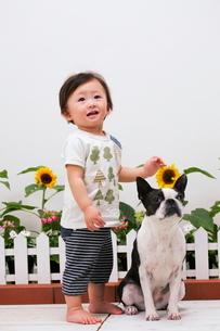 犬と赤ちゃんの写真素材 [FYI04018492]