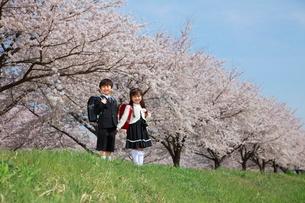 桜並木で手をつなぐ新一年生の写真素材 [FYI04018512]