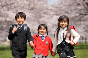 桜の前で手をつなぐ新入生たちの写真素材 [FYI04018514]