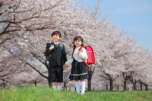 桜並木で手をつなぐ新一年生の写真素材 [FYI04018517]