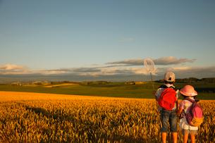 夕暮れの麦畑を見つめる兄妹の写真素材 [FYI04018562]