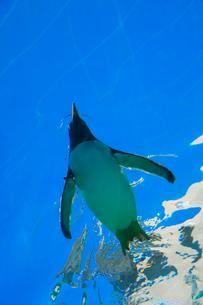 空飛ぶペンギンの写真素材 [FYI04018588]
