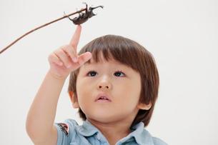 カブトムシを指差す男の子の写真素材 [FYI04018600]
