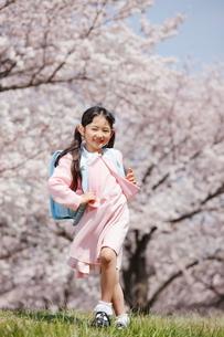 桜並木を歩く一年生の写真素材 [FYI04018602]