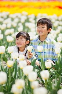 チューリップ畑で笑う兄妹の写真素材 [FYI04018626]