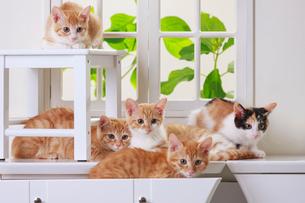 5匹の子ネコの写真素材 [FYI04018685]