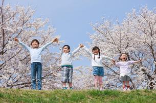桜の木の下で手を上げる子供たちの写真素材 [FYI04018816]