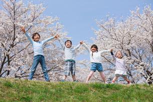 桜の木の下で手を上げる子供たちの写真素材 [FYI04018818]