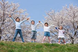 桜の木の下で手を上げる子供たちの写真素材 [FYI04018819]
