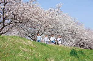 桜並木を手をつないで歩く子供たちの写真素材 [FYI04018821]